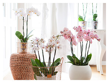 piko plant inspiration gallery1
